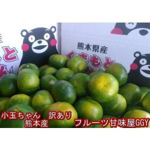 小玉ちゃん 熊本みかん 訳あり 1箱5kg フルーツ グルメ