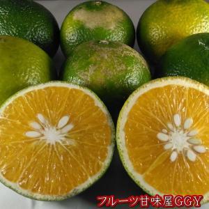 スイートスプリング 訳あり 熊本産 1箱 箱込10キロ(9kg+保証分500g)フルーツ グルメ|fruitkanmiya-ggy