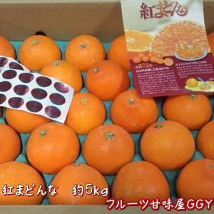 紅まどんな 約5kg(28玉入り) 愛媛産|fruitkanmiya-ggy