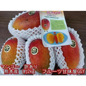 マンゴー 訳あり【規格外】加工用 熊本産 約2kg クール便発送|fruitkanmiya-ggy