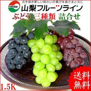 敬老の日 ギフト 山梨県産 特産品 ぶどう 詰め合わせ おまかせ3種類セット 1.5Kg 産地直送 送料無料一部地域を除く|fruits-line