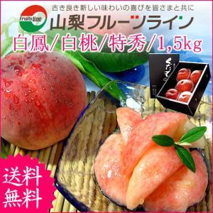 敬老の日 プレゼント ギフト フルーツ 桃 モモ もも 山梨県産 特産品 甲斐黄金桃 特秀 1.5kg 送料無料 一部地域を除く|fruits-line