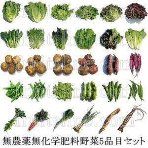 有機と旬で付き合うお試し野菜セット 山梨県産 特産品 名物商品 無農薬 無化学肥料 栽培野菜5品目詰め合わせ 送料無料 一部地域を除く