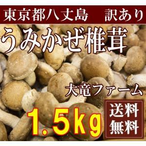 【予約商品:約3ヶ月待】海風しいたけ 訳あり品 1.5kg(東京都 大竜ファーム)八丈島野菜・無農薬・無化学肥料・産地直送・送料無料 fs21