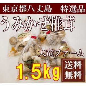 【予約商品:約3ヶ月待】海風しいたけ 特選品 1.5kg(東京都 大竜ファーム)八丈島野菜・無農薬・無化学肥料・産地直送・送料無料 fs21