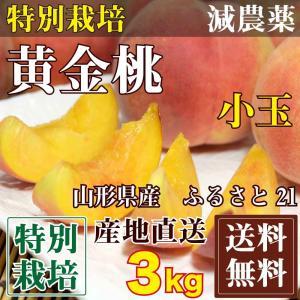 ふるさと21おすすめ「黄金桃」小玉 約2.7〜3kg(12〜...