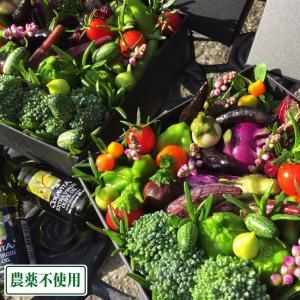 ベジタブルアレンジメント ボックスタイプ(オリーブオイル付き) (兵庫県 ファーマーズヤード) 農薬・化学肥料不使用 産地直送|fs21