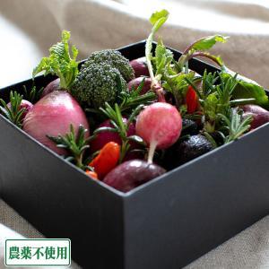 ベジタブルアレンジメント ボックスタイプ (兵庫県 ファーマーズヤード) 農薬・化学肥料不使用 産地直送|fs21