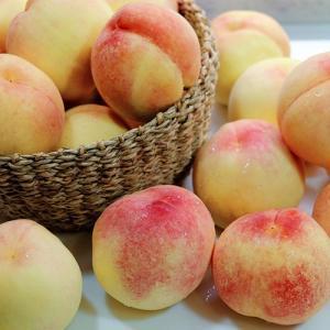 【家庭用】桃 白桃 9〜12玉(3kg)×2箱 (山梨県 フルヤ農園) 産地直送|fs21