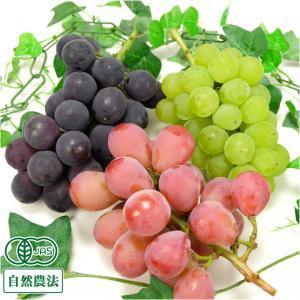 3種のぶどうセット 2kg 自然農法 (宮城県 後藤ぶどう園) 産地直送|fs21