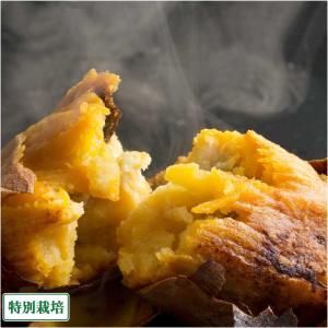 【セール】【小玉】[クール冷凍] 焼き芋(安納芋) 約800g×5袋 特別栽培 (鹿児島 濱川和成)|fs21