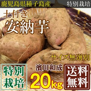 安納芋 土付きサイズ無選別 20kg 特別栽培 (鹿児島 濱...