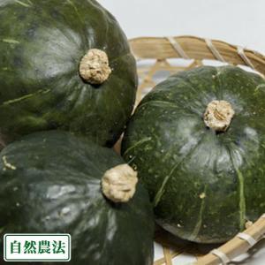 坊ちゃんかぼちゃ サイズ無選別 約5kg 自然農法 (北海道 太田農園) カボチャ 無農薬野菜 産地直送|fs21
