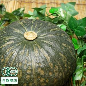 かぼちゃ(栗将軍) 約10kg 有機JAS 自然農法 (北海道 はるか農園) 産地直送|fs21