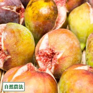 【クール冷蔵便】イチジク蓬莱柿 300g×3パック 自然農法 (広島県 万汐農園) 産地直送|fs21