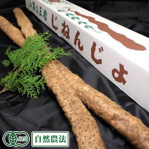 自然薯 『特選』贈答用 約1.5kg(2〜3本) 農薬不使用(無農薬) オーガニック 自然農法 (熊...