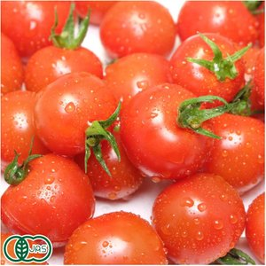 【クール冷蔵便】 有機 ミニトマト 150g×20パック 有機JAS (青森県 自然食ねっと青森) 産地直送|fs21