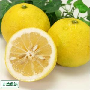 【A・B混合】 ニューサマーオレンジ 3kg 自然農法 (神奈川県 興津農園) fs21