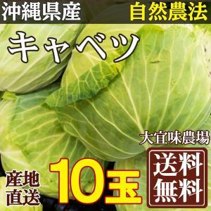 キャベツ 10玉入り(約16kg) 自然農法 (沖縄県 大宜味農場) 産地直送|fs21