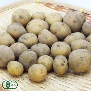 【赤ちゃんポテト】有機 北あかり(訳あり) 5kg 有機JAS (青森県 自然食ねっと青森) 無農薬 じゃがいも fs21