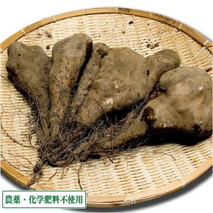 短形自然薯(土付き) 3kg 農薬不使用 (青森県 須藤農園) 産地直送 fs21