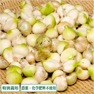 【予約商品】無臭にんにく 1kg 特別栽培 (青森県 須藤農園) 産地直送|fs21