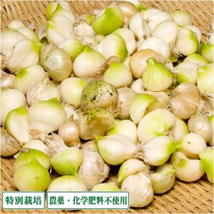 【予約商品】無臭にんにく 3kg 特別栽培 (青森県 須藤農園) 産地直送|fs21
