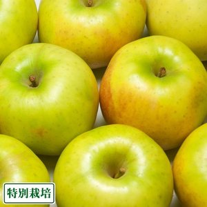 青林 訳あり 10kg箱(青森県 田村りんご農園) 特別栽培 減農薬 りんご 送料無料 産地直送