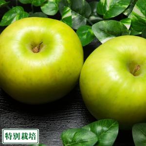 青林 A品10kg箱(青森県 田村りんご農園)特別栽培減農薬りんご・送料無料・産地直送