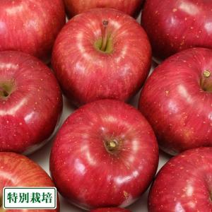 【予約商品】ふじ 秀品10kg箱 特別栽培 (青森県 田村りんご農園) 産地直送