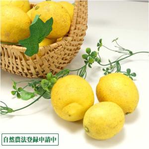 【クール冷蔵便】広島県産(とびしま)レモン 3kg 無選別 自然農法登録中 (広島県 とびしま農園) 産地直送|fs21