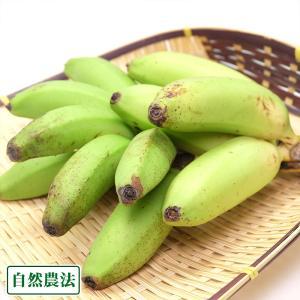 ミニバナナ 2kg 自然農法 (沖縄県 石垣島無農薬自然農場) 産地直送|fs21