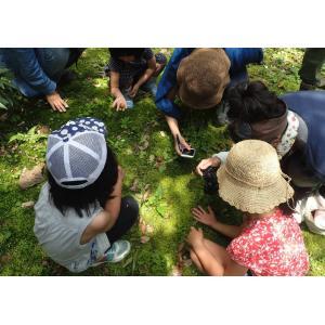 【イベント参加券】『まちの植物のせかい』を体験しよう!まちの植物観察ワークショップ ftk-tsutayaelectrics 03