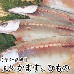 【愛知県産】天然かますの干物 1尾|fugu