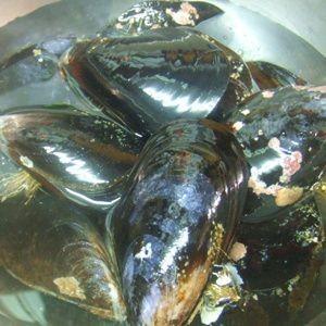 【愛知県産】ムール貝 5kg|fugu