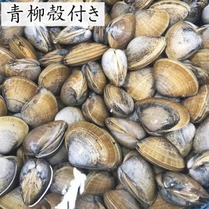 【愛知県産】青柳(バカ貝)殻付(特)|fugu