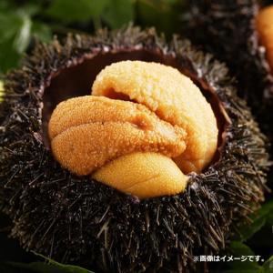 バフンウニ 100g 冷凍 ばふんうに むき身 高級食材 ギフト Aグレード A級 お歳暮 お中元 贈り物|fuji-s