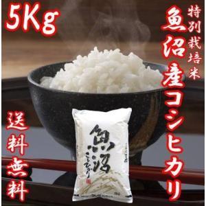 米 お米 5kg 令和2年産 新米 コシヒカリ 魚沼産 贈答用 ギフト 新潟県 白米 送料無料