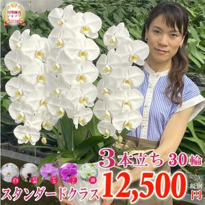 各種お祝いに最適!見た目の豪華さだけではなく花持ちも抜群!1万円前後のお花では価格以上の見栄えのする...
