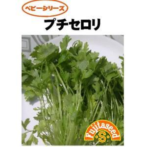 野菜 タネ 種 プチセロリ 藤田種子|fujitaseed