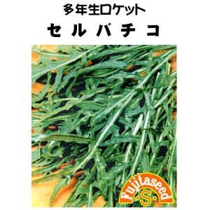 野菜 タネ 種 セルバチコワイルドロケット 藤田種子|fujitaseed