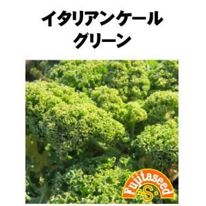 野菜 タネ 種 イタリアンケール グリーン 藤田種子|fujitaseed