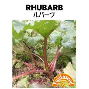野菜 タネ 種 ルバーブ 藤田種子|fujitaseed