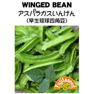 野菜 タネ 種 アスパラガスいんげん(早生琉球四角豆) 藤田種子|fujitaseed