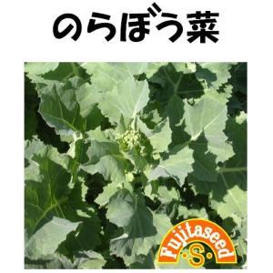 野菜 タネ 種 のらぼう菜 藤田種子|fujitaseed