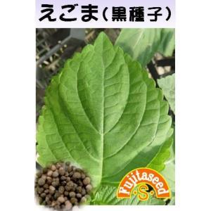野菜 タネ 種 えごま(黒種子) 藤田種子|fujitaseed