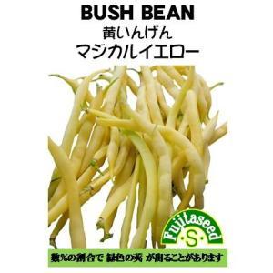 野菜 タネ 種 黄いんげん マジカルイエロー 藤田種子|fujitaseed