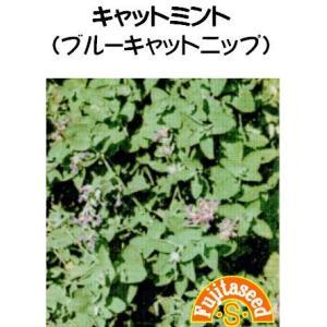 【栽培方法】 シソ科の多年草で、草丈20〜40cm。開花は晩春から初秋で、青紫色の花をつけます。真夏...