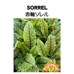 ハーブ タネ 種 赤軸ソレル 藤田種子|fujitaseed