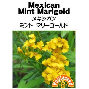 ハーブ タネ 種 メキシカンミントマリーゴールド 藤田種子|fujitaseed